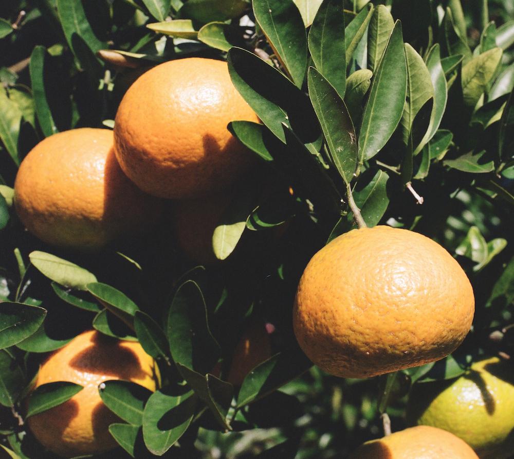 yaetoco-japanese-citrus