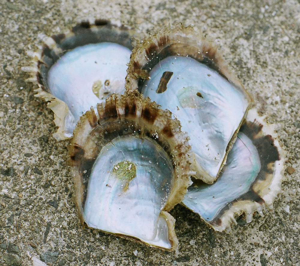 yaetoco-pearls