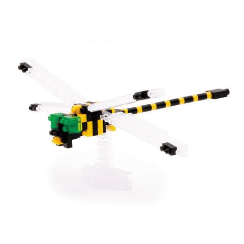 goldenringeddragonfly_1