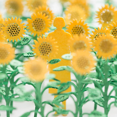 no-68-sunflower1