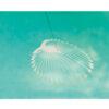 desktop-kurage-bug-jelly-fish