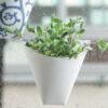 plant-3a